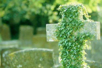 Sostenibile, dead or alive.