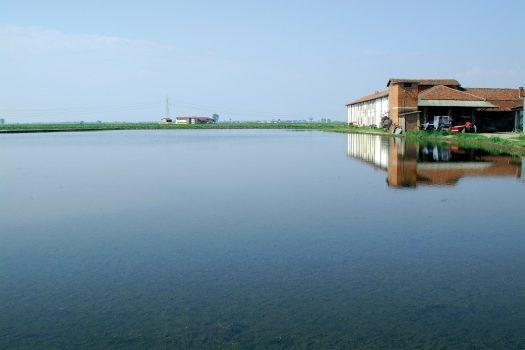 Gliaironi e il lato circolare del riso